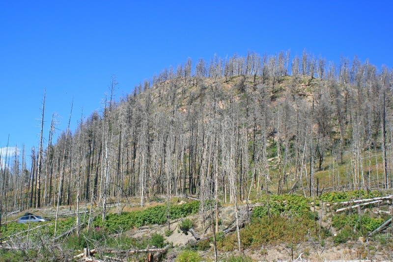Yellowstone brände skogen royaltyfria foton
