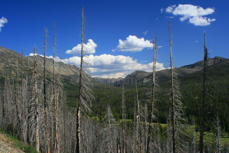 Yellowstone brände skogen arkivbild