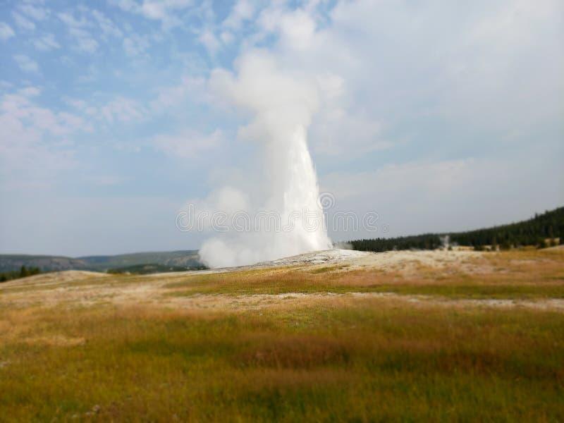 Yellowstone exploderar i en pålagd iconic skärm min gamla trogna gaiser fotografering för bildbyråer