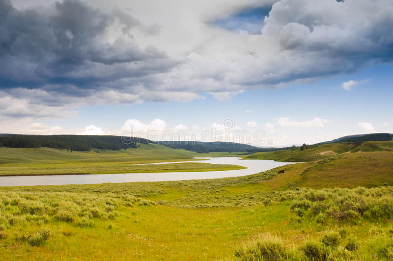 Yellowstone flod royaltyfria bilder