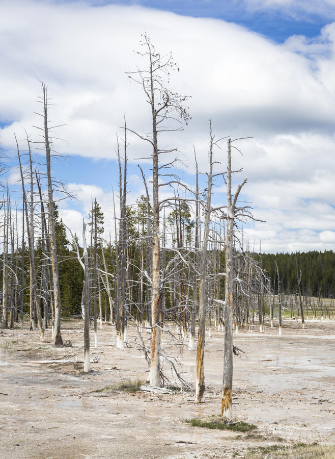 Download Yellowstone National Park stock image. Image of site - 65543469