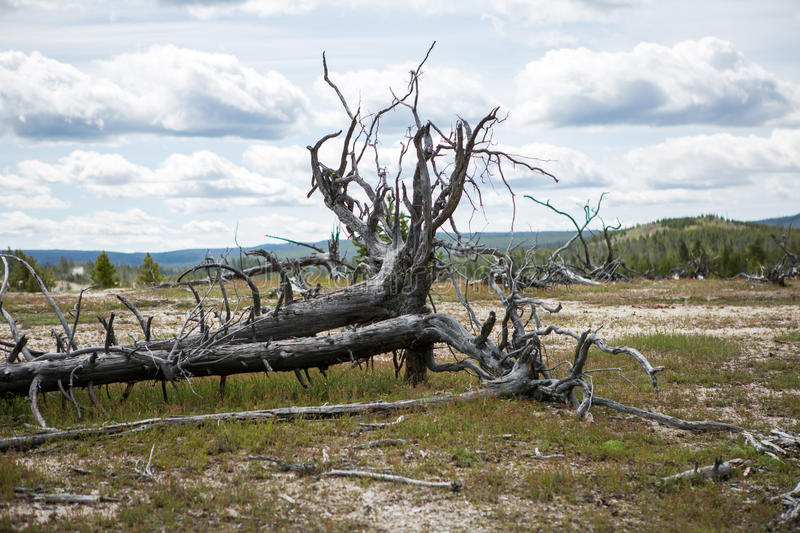 Yellowstone National Park Panorama. Yellowstone National Park is a national park located primarily in the U.S. state of Wyoming, although it also extends into stock photography