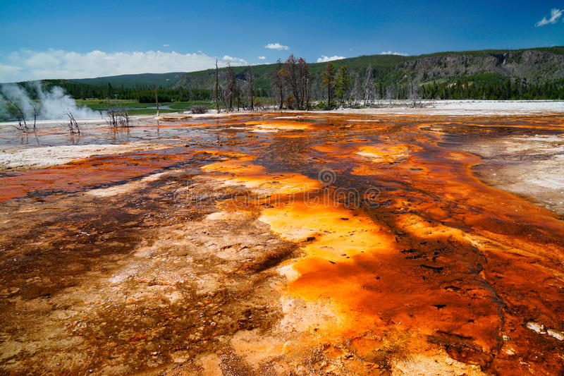 Yellowstone National Park royalty free stock image