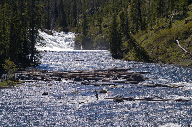 Yellowstone nationalpark, Wyoming, USA arkivfoton