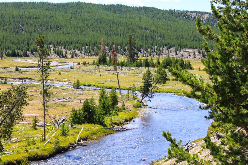 Yellowstone River landscape in Yellowstone National Park royalty free stock images