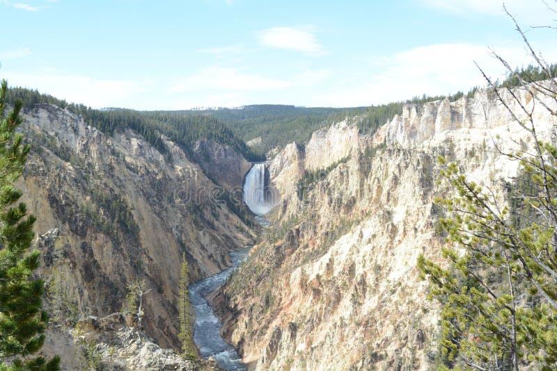 Yellowstone River nedgångar i Yellowstone NP arkivbilder