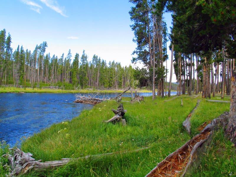 Yellowstone Rzeczny przyglądający z powrotem Yellowstone jezioro obrazy royalty free