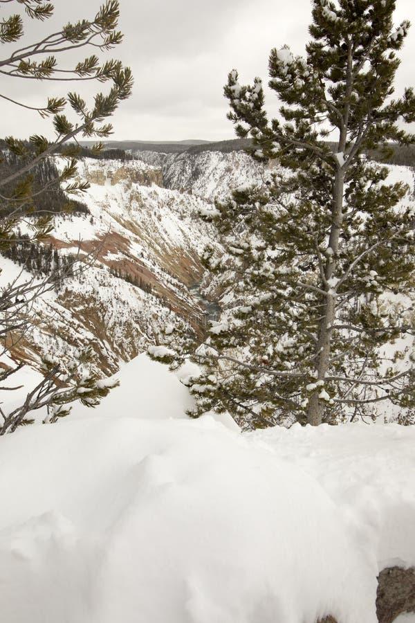 Yellowstone rzeka przez Uroczystego jaru Yellowstone obywatel P obrazy stock