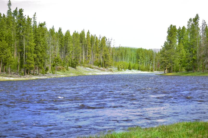 Yellowstone sjö med flödande vatten för pinjeskog fotografering för bildbyråer