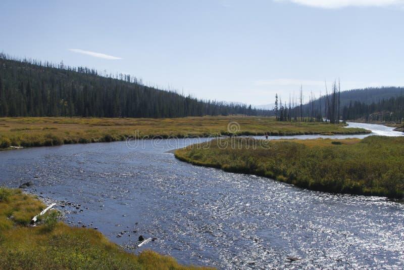 Yellowstone tusen dollar Tetons royaltyfri foto