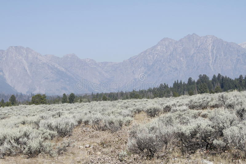 Yellowstone tusen dollar Tetons arkivbilder