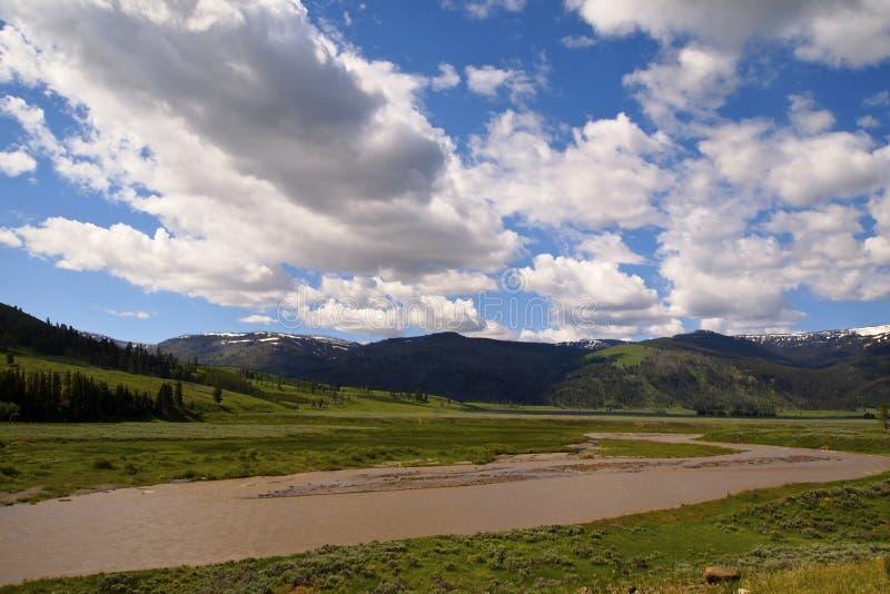 Yellowstonemeningen stock afbeelding