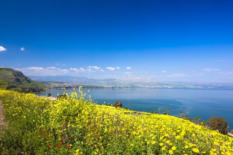 Yelloy bloeit dichtbij overzees van Galilee in zonnige de lentedag De mooie aard van Israël stock fotografie