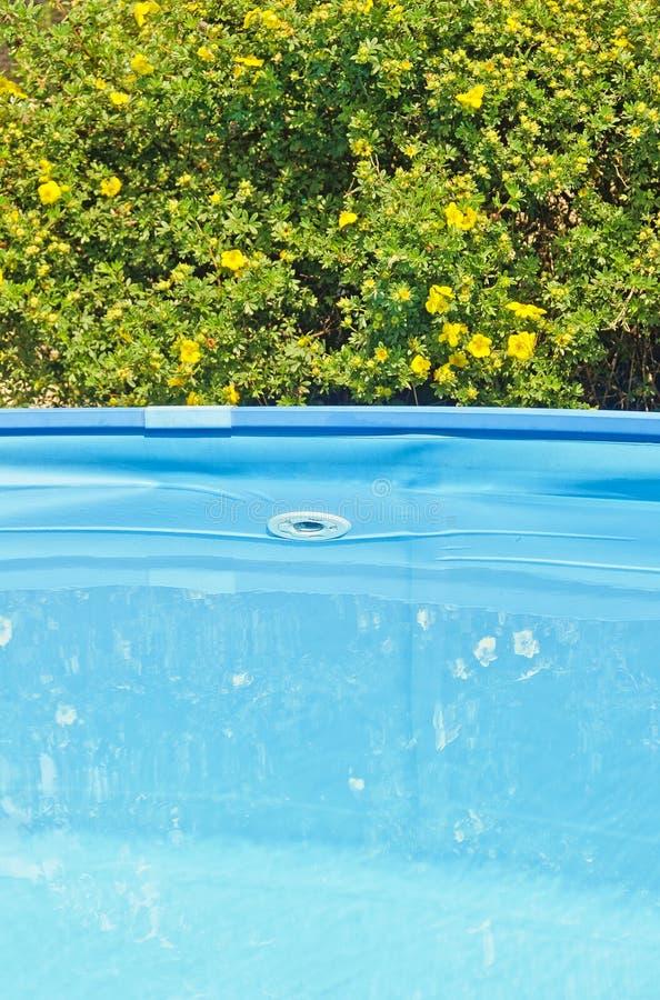 Yelow开花和一个蓝色水池 免版税图库摄影