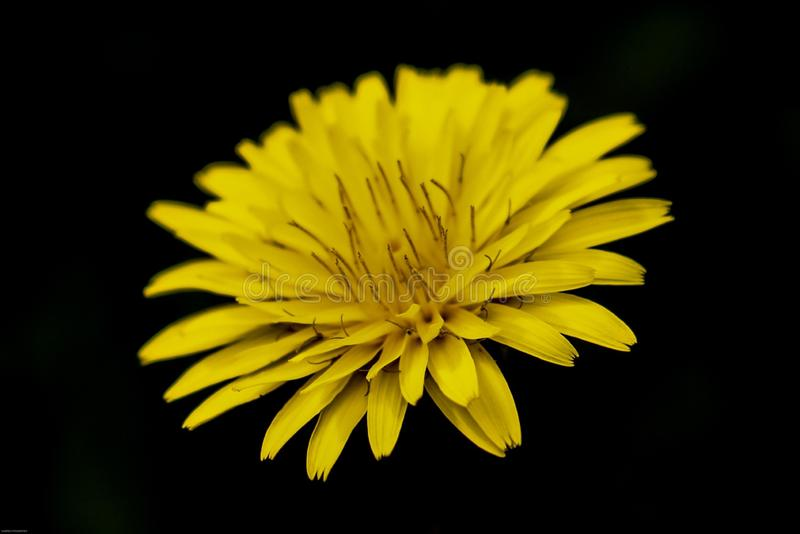 Yelow flower stock photos
