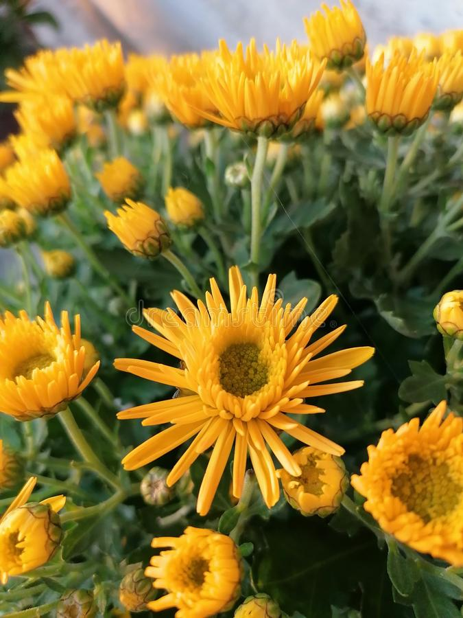 Yelow flower royalty free stock photography