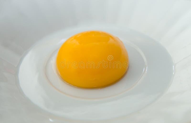 Yema de huevo foto de archivo
