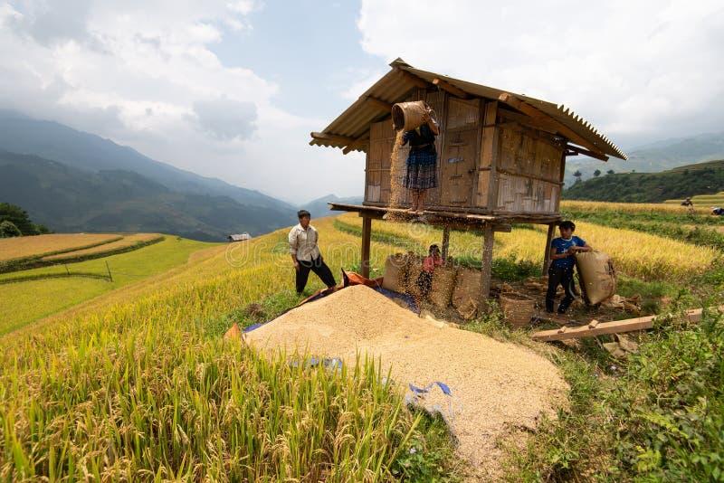 YEN BAI, VIETNAM - 17 de septiembre de 2016: Los granjeros están trabajando en la terraza del arroz en MU Cang Chai t, Yen Bai, V foto de archivo libre de regalías