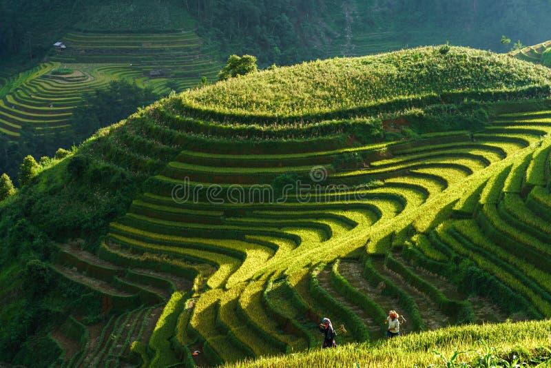 Yen Bai, Vietnam - 18. September 2017: Terassenförmig angelegtes Reisfeld in der Erntezeit mit Frauen der ethnischen Minderheit a stockfoto