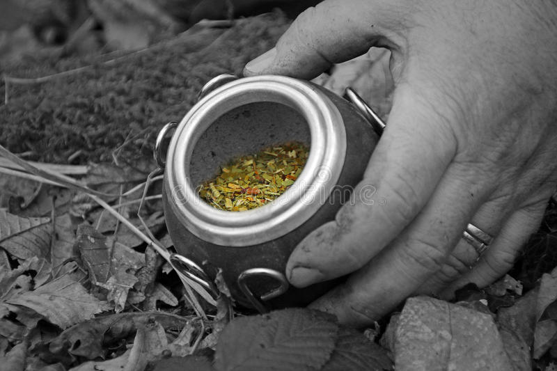 Yerba Mate And Knife In Woods Stock Image Image Of