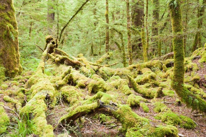 Yermo de la selva tropical de la Virgen de Fiordland NP NZ fotografía de archivo libre de regalías