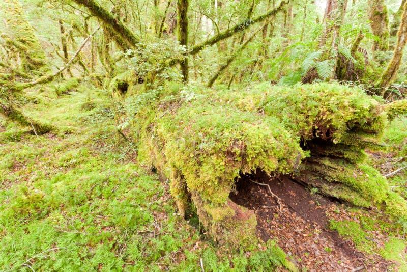 Yermo de la selva tropical de la Virgen de Fiordland NP NZ imágenes de archivo libres de regalías