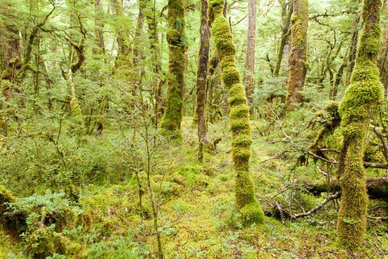 Yermo de la selva tropical de la Virgen de Fiordland NP NZ foto de archivo libre de regalías