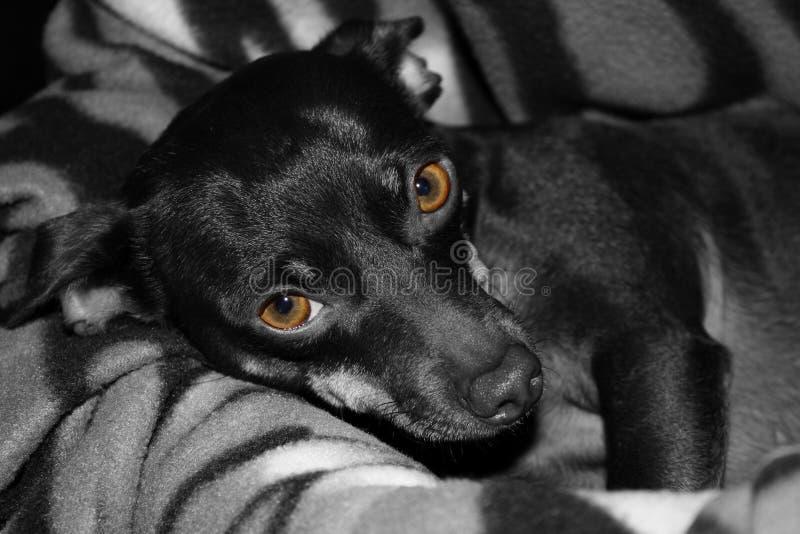 Yeux de Brown de Cocos photo libre de droits