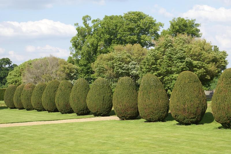 Yew topiary garden royalty free stock image