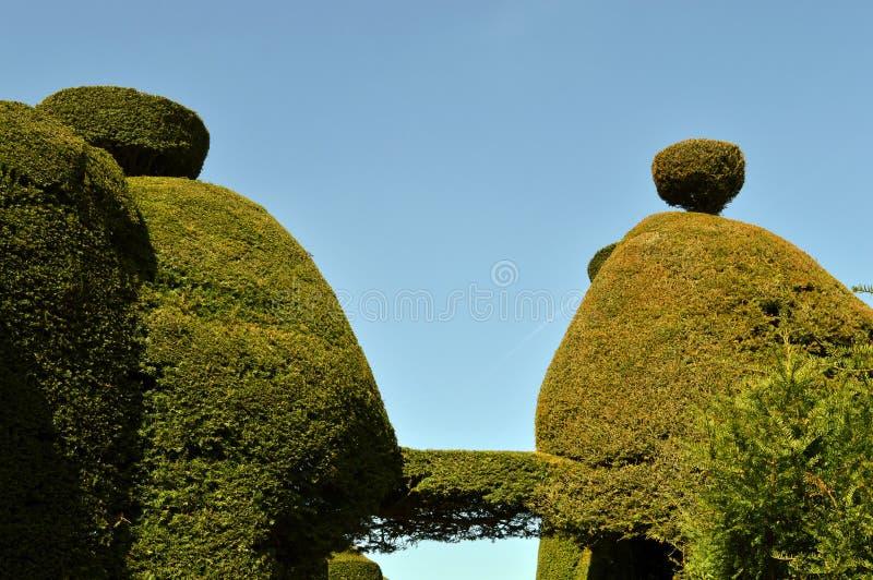 Yew tree topiary royalty free stock photo