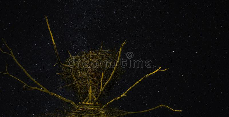 Yggdrasil i natten royaltyfri bild