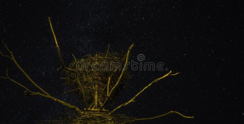 Yggdrasil na noite imagem de stock royalty free