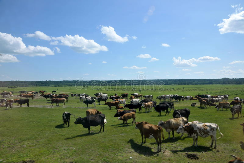 Yimin River-Herden und -mengen lizenzfreies stockbild