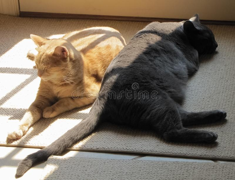 Yin and Yang Cats in the Sun stock photography