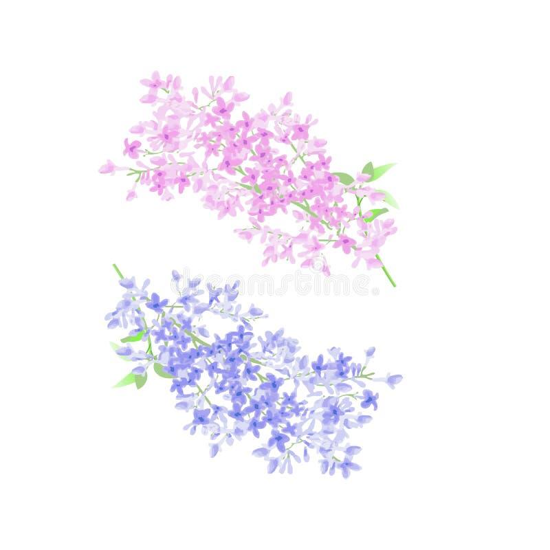 Yin yang de la rama de la lila stock de ilustración