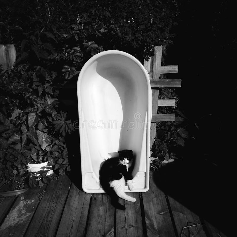 Yin and yang. Sleepy cat lay down to sleep in a children`s bath, left in the yard stock photos