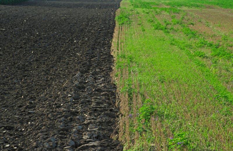 Ying Yang åkermark, gräsplan på rätten, svart på vänstersida royaltyfria foton