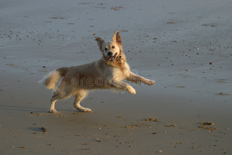 Yippee! stock photography