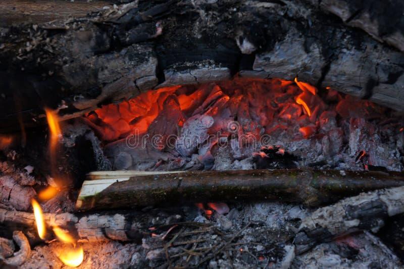 Żyje węgle zdjęcie stock