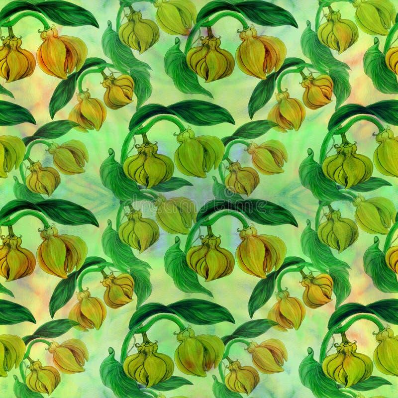 Ylang-Ylang Aquarela que pinta plantas medicinais, da perfumaria e do cosmético wallpaper Use materiais impressos, sinais, cartaz ilustração royalty free