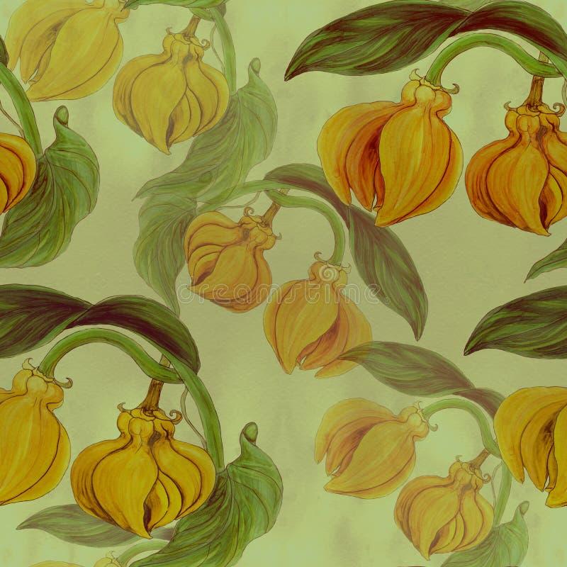 Ylang-Ylang Aquarela que pinta plantas medicinais, da perfumaria e do cosmético wallpaper Use materiais impressos, sinais, cartaz ilustração stock