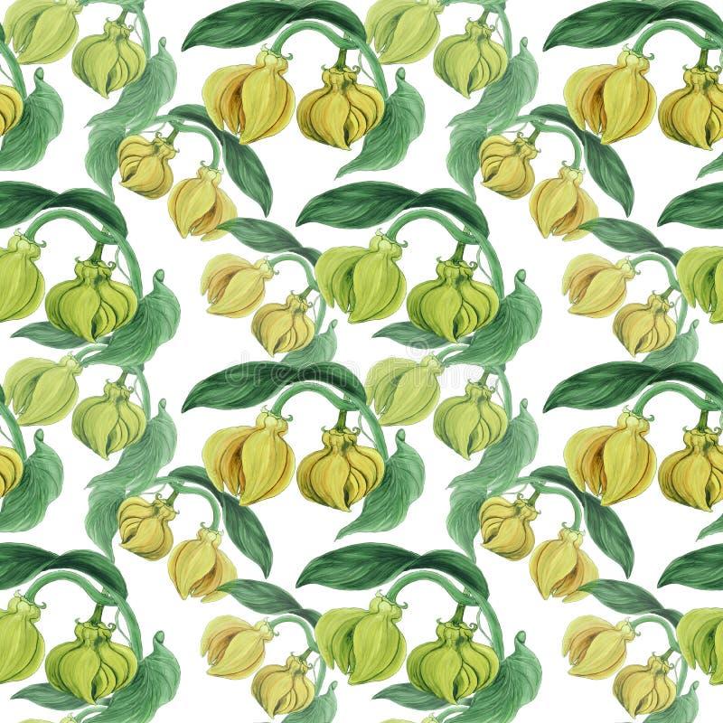 Ylang-Ylang Aquarela que pinta plantas medicinais, da perfumaria e do cosmético wallpaper Use materiais impressos, sinais, cartaz ilustração do vetor