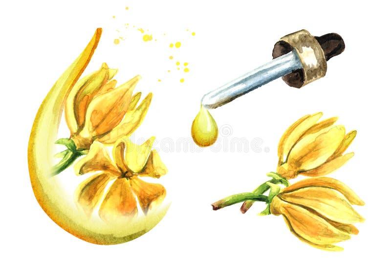 Ylang-Ylang-Gelbblume Aroma-Odroata-Grundöl-Set, Spa und Aromatherapie Handgezeichnete Darstellung in Wasserfarben, isoliert auf lizenzfreie abbildung