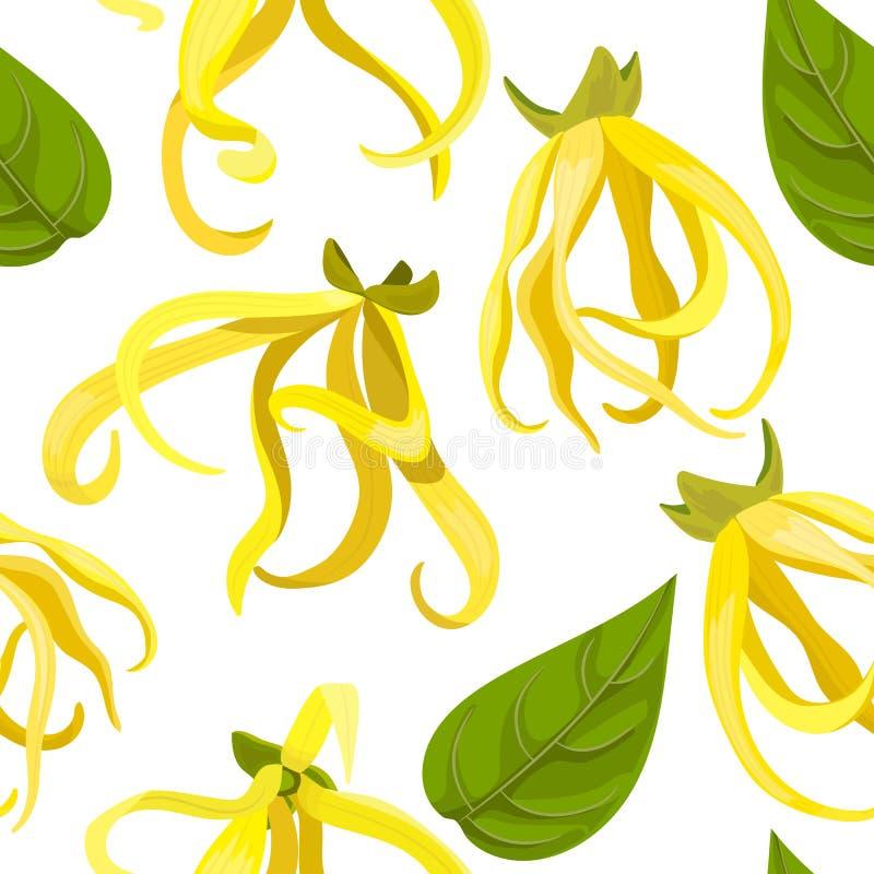 Ylang-Ylang τροπικό odorata Cananga λουλουδιών άνευ ραφής διάνυσμα προτύπ&omeg απεικόνιση αποθεμάτων
