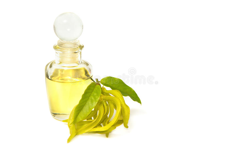 Ylang-ylang aromata masażu olej zdjęcia stock
