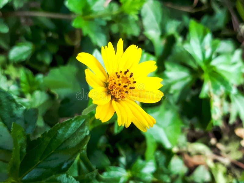 Yllowflower royalty-vrije stock foto