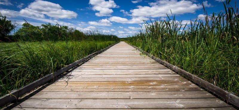 Ymoeras in Binnenland Ontario Canada stock foto