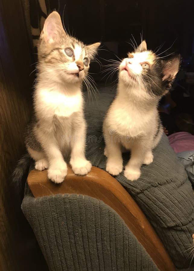 Ynkryggar och kattungar royaltyfri bild
