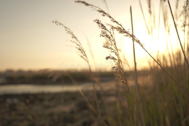 Yodogawa-Sonnenuntergang lizenzfreie stockfotos