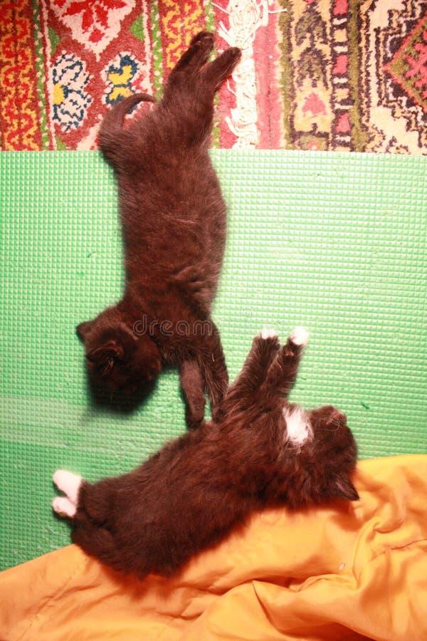 Yoga de los gatitos fotos de archivo